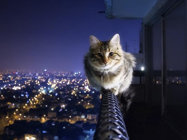 Ночная жизнь кошек